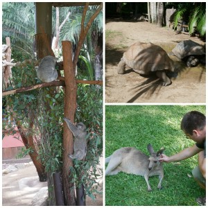 australia zoo animals