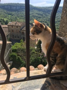 kitty in window southern france