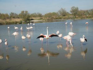 flamingo france